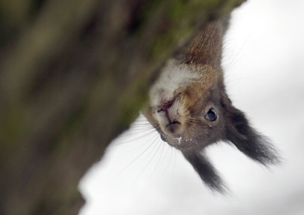 Politician Who Criticized Squirrels Gets Hospitalized By Squirrel