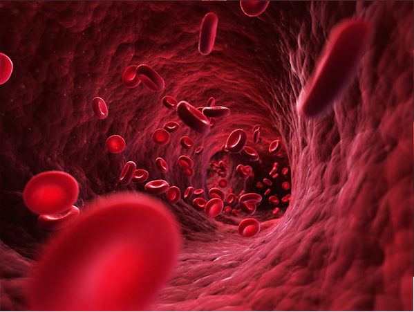 How Much Blood Is in the Human Body?