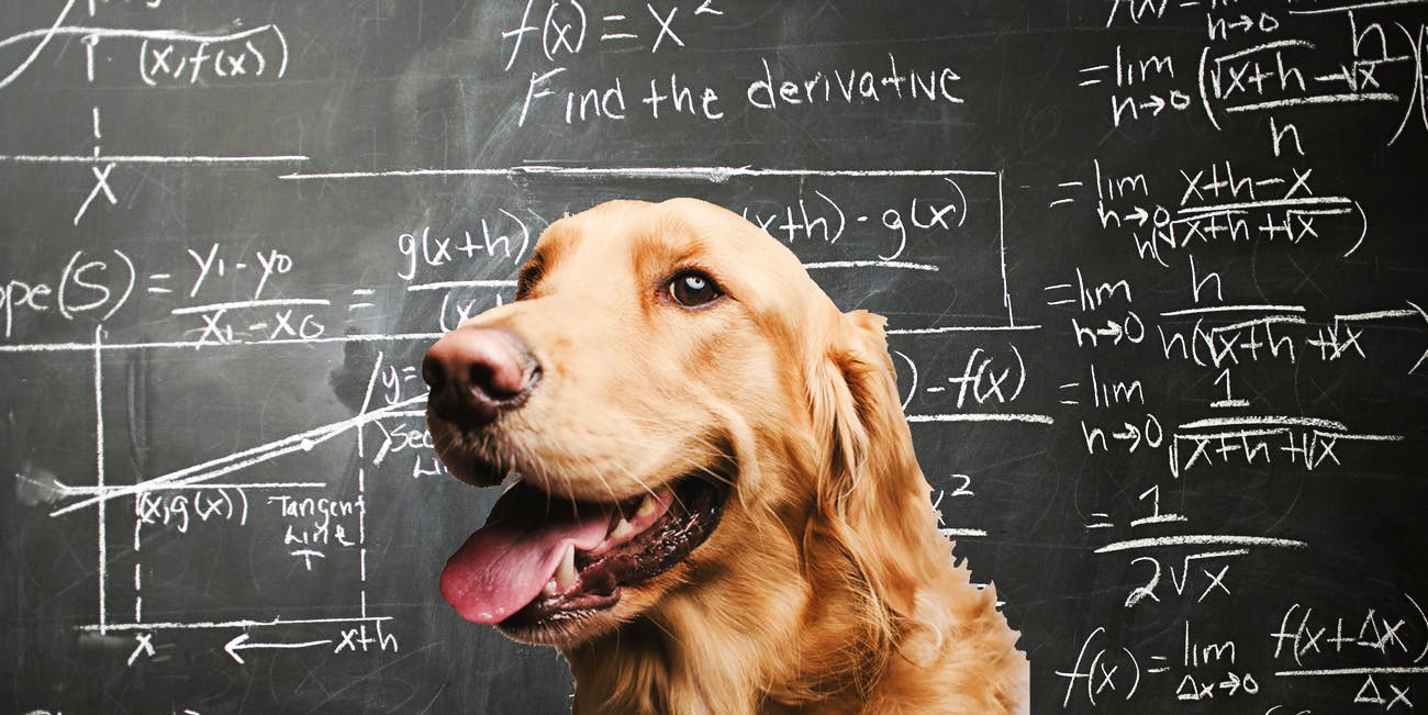 Dogs process numerical quantities in similar brain region as humans
