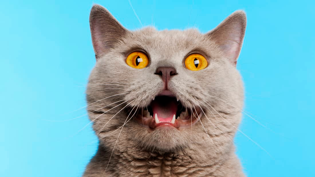 Why Do Cats Leave Their Mouths Open After Smelling Something?