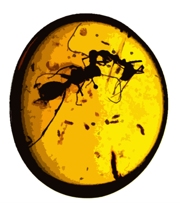 Ant Warfare: Fossils Reveal Insects Locked in Mortal Combat