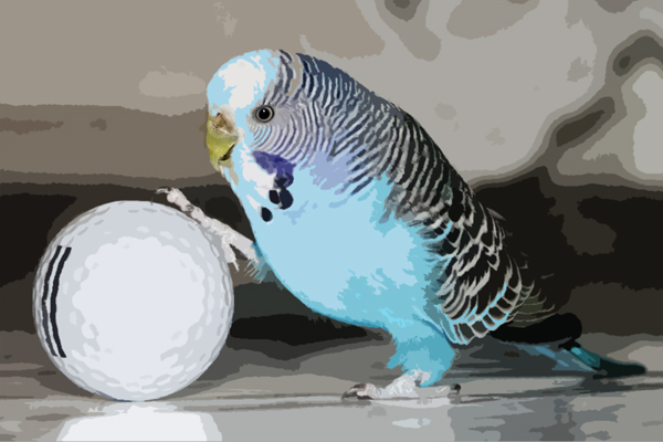 Bird With Golf Ball Manages To Be More Entertaining Than Golf