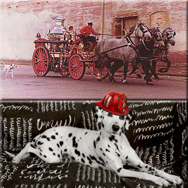 Mr. Answer Man Please Tell Us: Why are Dalmatians the traditional mascots of firehouses?