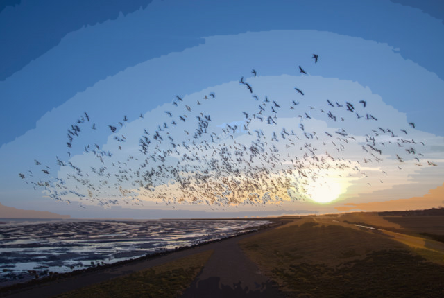 How Do Birds Know How to Migrate?